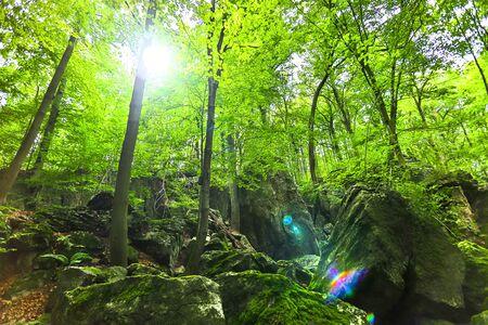 forest rock scape background Archivio Fotografico