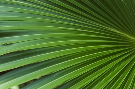 Fan-shaped leaves creating abstract shapes and colors. Stock Photo - 4634384