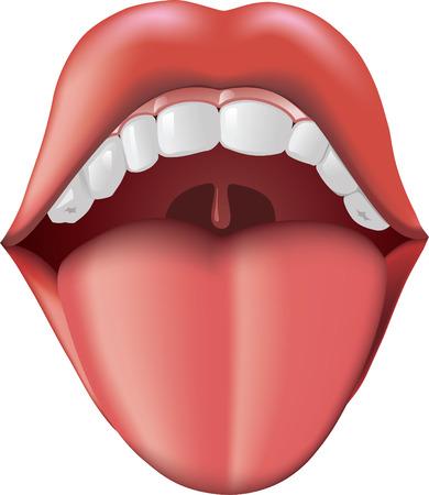 bouche homme: Bouche ouverte avec languette coller.  Illustration