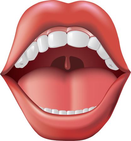 口: 口を開けてください。  イラスト・ベクター素材