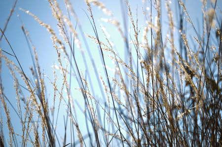 Wild grass blowing in the wind. Stok Fotoğraf