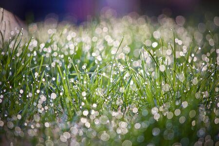 Image d'herbe juste après une pluie de matinée. Faible profondeur de champ. La lumière du soleil du matin est en arrière-plan. Banque d'images - 57234430