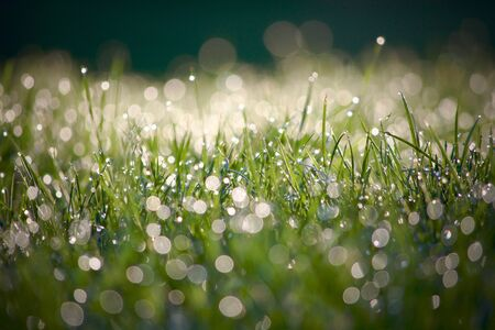 Image of grass right after a morning rain. Shallow depth of field. The light of the morning sun is in the background.