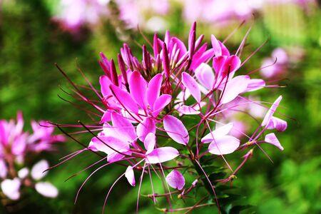 verschillen: Flowers02