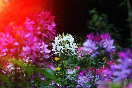 differ: warm flowers