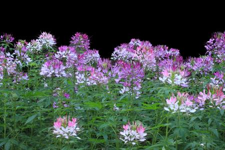 defines: Flowers Stock Photo