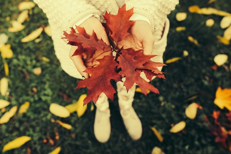 change of seasons: Autumn leaves in girl hands Stock Photo