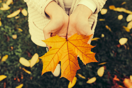 hojas antiguas: Autumn leaves in girl hands, instagram toned Foto de archivo