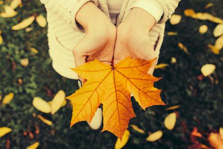 hojas antiguas: Hojas de oto�o en manos muchacha, Instagram tonificado Foto de archivo