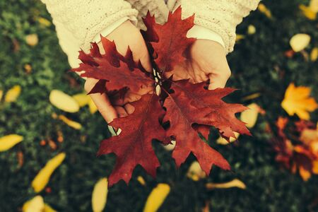 Autumn leaves in girl hands, instagram toned Stock Photo
