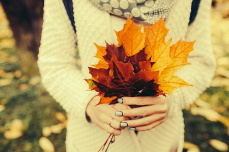 red gram: Autumn leaves in girl hands Stock Photo