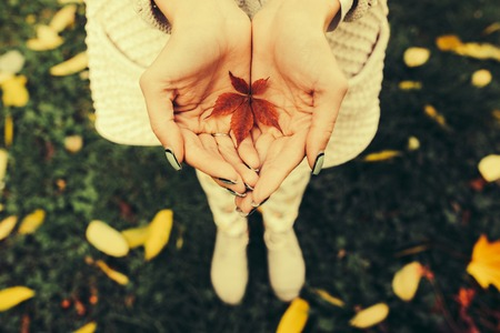 Autumn leaves in girl hands toned Banque d'images
