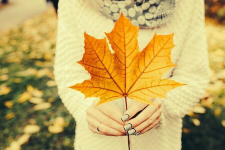 red gram: Autumn leaves in girl hands, instagram toned Stock Photo