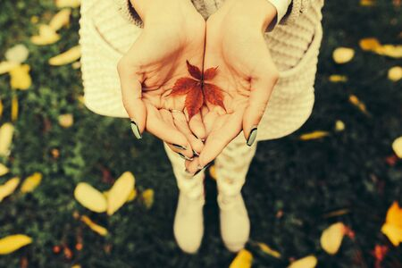 red gram: Autumn leaves in girl hands,