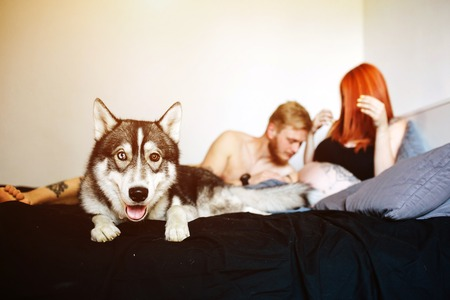 gestation: Pregnant woman, man and dog lying on a bed in the bedroom