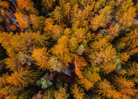 Top down aerial drone image of a forest, wild nature