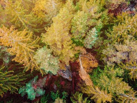 숲, 야생의 공중 탈 방식 이미지 아래로 가기