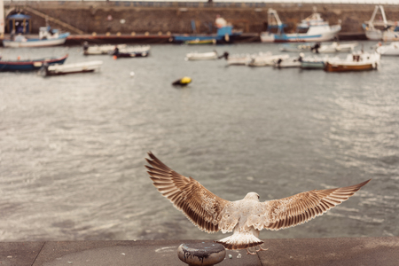 Seagulls at the Pier