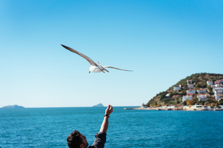 The male hand feeds the sea gulls