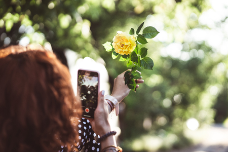 Woman photographing a yellow rose on a smartphone Stock fotó