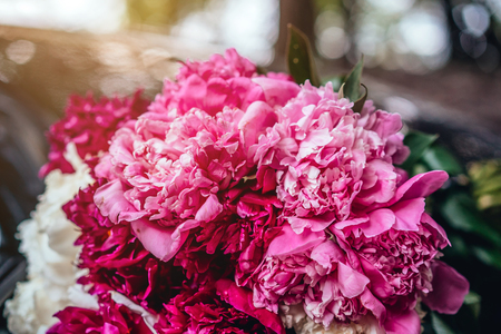Beautiful bouquet of peonies lies on the hood of the car.
