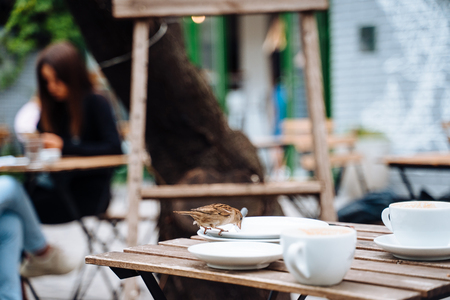 Bird in city. Sparrow sitting on table in outdoor cafe, close view