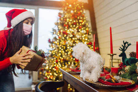 Terrier on a Christmas table, a girl stands at the side and holds a gift