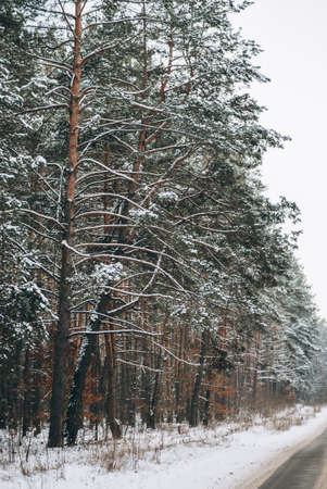Forest during winter with picturesque road through it Banque d'images