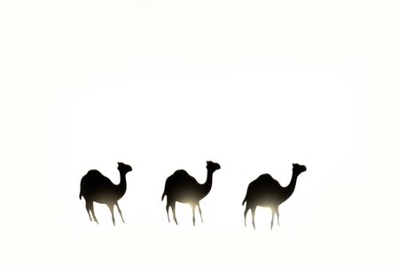 Shadow of three camels on white background