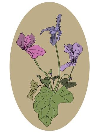cyclamen: Cyclamen flowers