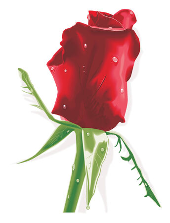 Vector. Red rose with raindrops Stock Vector - 4074079