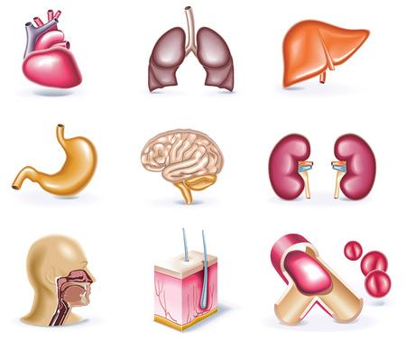 sistema digestivo humano: icono de estilo de dibujos animados conjunto. Parte 30. Medicina