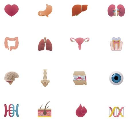 foie humain: anatomie icon set Illustration