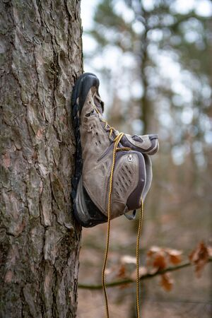 an abandoned shoe nailed onto the trunk of a tree in a forest