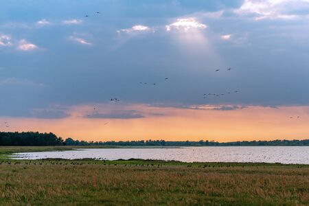 Population of wild geese at scenic Guelper See (Havelaue) in Brandenburg, Germany at sunset Imagens
