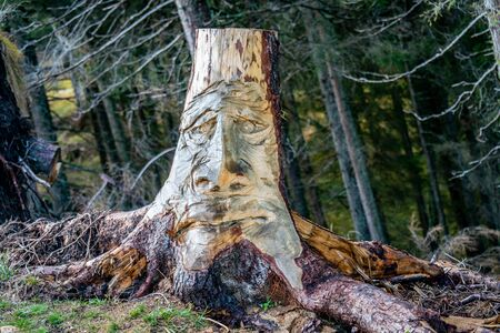 Funny face carved in a wooden tree trunk growing in a forest in the italian alps near Voels am Schlern