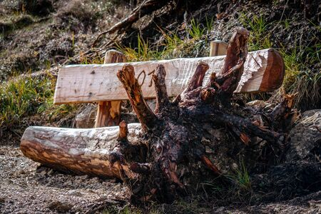 A very special wooden bench made from a tree trunk with the roots still attatched on one side and carved backrest