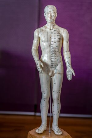 Male acupuncture doll for traditional chinese medicine