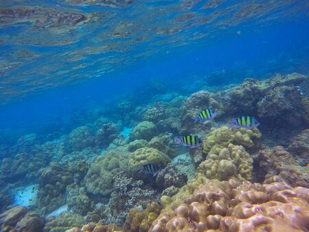 warm water fish: Underwater sea view, coral reefs, Bali, Indonesia Stock Photo