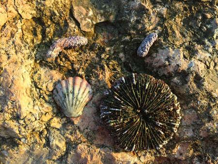 bali beach: The shells on the orange stone, Bali beach, Indonesia Stock Photo