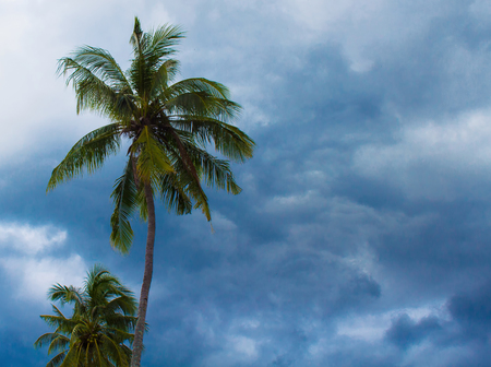 Coconut palm tree silhouette on cloudy sky background. Green leaves on wind. Tropical garden. Natural backdrop for exotic vacation, paradise life. Horizontal banner or poster template with text place Stock Photo