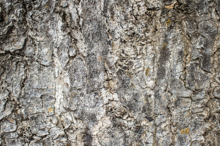 macrophoto: Wood texture closeup image. Macro photo of a tree surface. Natural background from forest for wooden banner template, shabby chick backdrop, ecology product package. Timber skin close-up picture