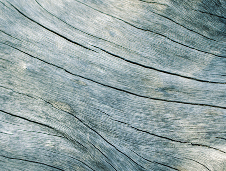 macrophoto: Blue wood texture close up photo. White and teal wood background. White old tree near the sea. Curves and lines on rustic timber. Rough timber texture. Sea wood backdrop. Silver old tree toned image