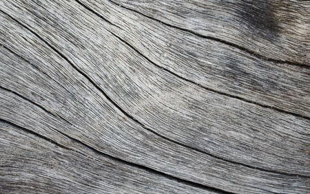 macrophoto: Wooden texture close up photo. White and grey wood background. White old tree near the sea. Curves and lines on rustic timber. Rough timber texture. Sea wood backdrop. Grey old tree blank table image