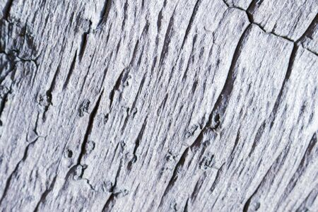 macrophoto: Wooden texture close up photo. White and grey wood background. White old tree near the sea. Curves and lines on rustic timber. Rough timber texture. Sea wood backdrop. Weathered tree texture pattern