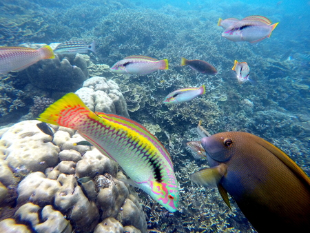 Underwater landscape with colorful fishes wrasse. Aquarium in wild nature. Seaside life scenery. Round coral shapes. Ocean ecosystem. Coral reef with animal. Tropical sea landscape. Seabed view Stock Photo