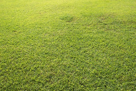 Green field background or wallpaper. Sunny day at the football field. Soccer or golf field surface. Freshly cut green grass texture. Summer natural backdrop. Yellow and green grass for playing