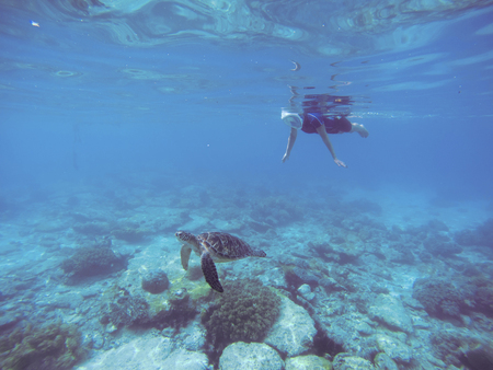 Snorkel with sea turtle. Woman swims undersea in swimming costume and full-face mask. Underwater photo of female snorkel. Snorkeling in coral reef with marine animal. Tropical sea nature background Stock Photo