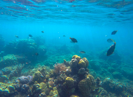 Undersea scene with marine animals. Exotic seashore corals and fishes. Snorkeling photo of sea bottom view with diverse species. Oceanic life environment. Silhouette of coral fish in turquoise water Stock Photo