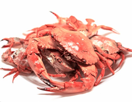 Red cooked crabs on white background. Steamed crabs bunch isolated. Fresh sea crabs boiled in hot water. Bright orange crab served for eat. Seafood dish photo for restaurant menu or product package